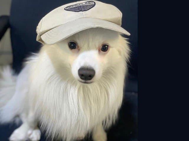 https://www.refriplast.com/wp-content/uploads/2020/10/Petfriendly.jpg