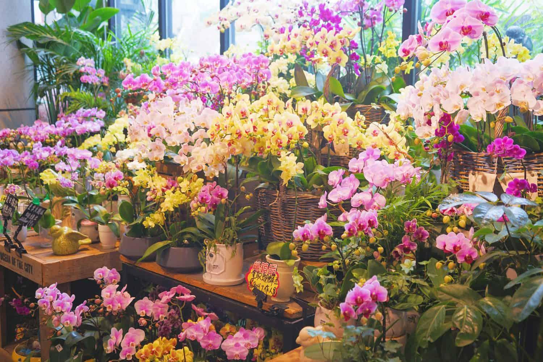 cuartos frios para flores